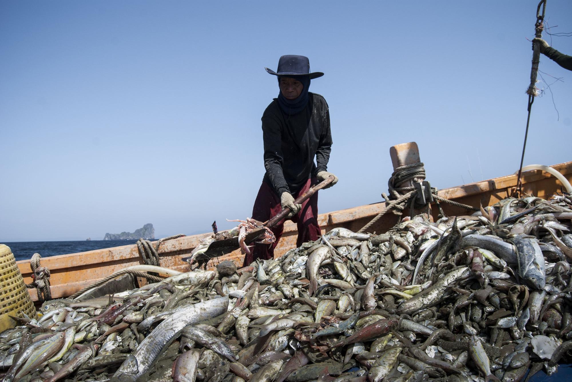 Вопросы современного рабства и принудительного труда в цепочке поставок производителей морепродуктов