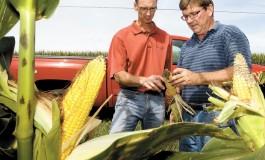 «Монсанто» запускает программу производства сельскохозяйственных культур с нейтральным показателем высвобождения углерода