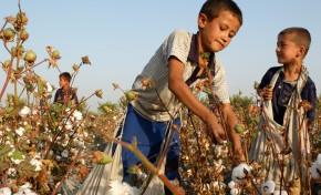 H&M отказалась от туркменского хлопка из-за использования детского труда