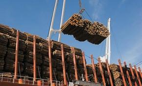 Лесопромышленники получат прибыль от экосистемных услуг лесов