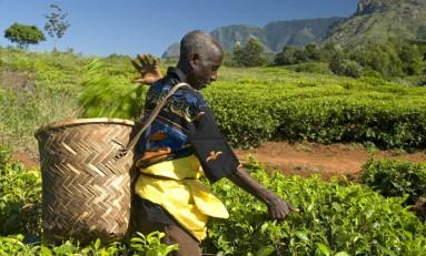 В рамках расширения своих обязательств перед Fairtrade Ferrero закупит больше какао и сахара у фермеров