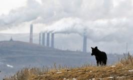 Природа за деньги. Сколько и как тратят на экологию российские металлурги