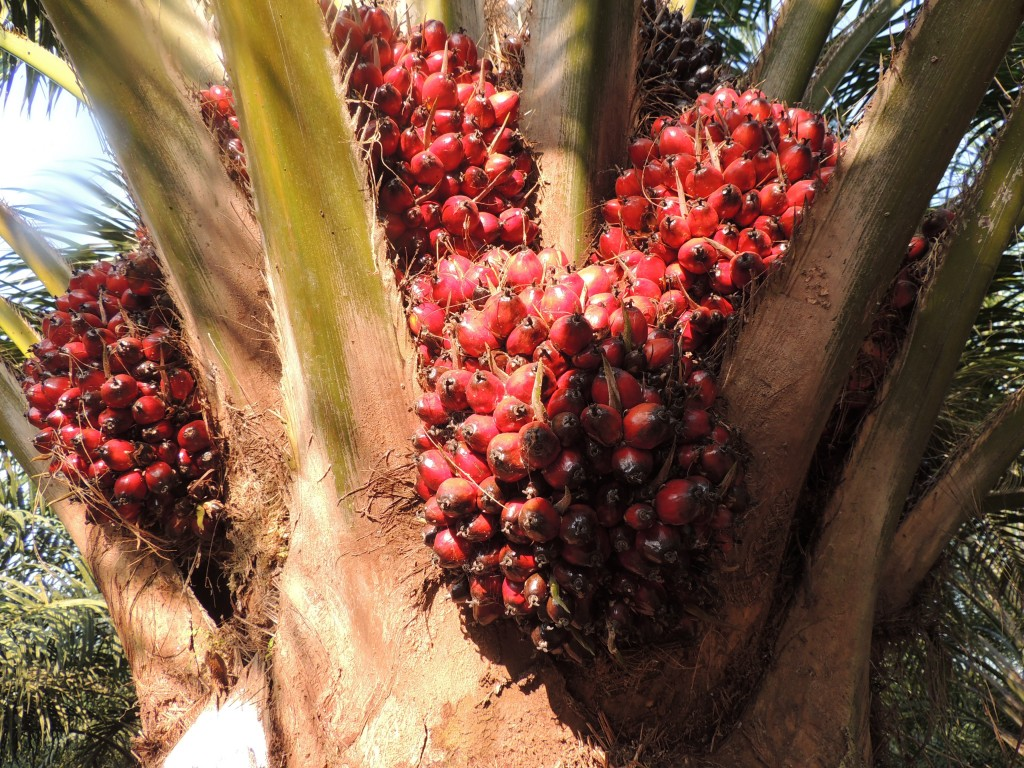 Ferrero лидирует в рейтинге 2016 WWF Palm Oil Scorecard