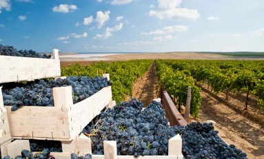 Изменение климата влияет на производство вина в мире