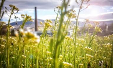 Солнечная энергия, велодоставка и другие экологические инициативы крафтовых пивоварен