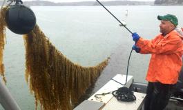 Морская плавучая ферма появится в США