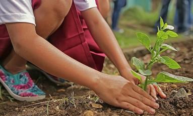 Природно-климатические решения помогут отдалить глобальное потепление