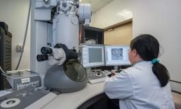 Сингапурские ученые научились производить биотопливо из отходов грибного производства