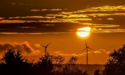 """Британский энергопроизводитель запустил первый в мире """"веганский тариф"""" на электричество"""