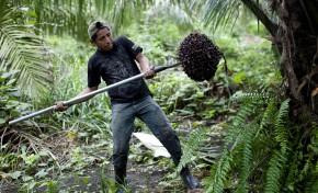 Инвесторы призвали упрочить сертификацию цепочек поставок пальмового масла