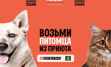 250 животных из приютов будут ждать новых хозяев на фестивале WOOF