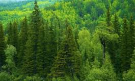 Очень ответственный лес