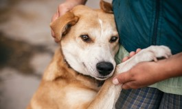 Питомцы Mail.ru и Добро Mail.ru помогут бездомным животным вместе с Purina