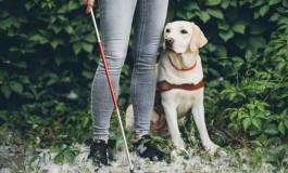 Сбербанк обучил своих сотрудников навыкам обслуживания незрячих клиентов, сопровождаемых собаками-поводырями